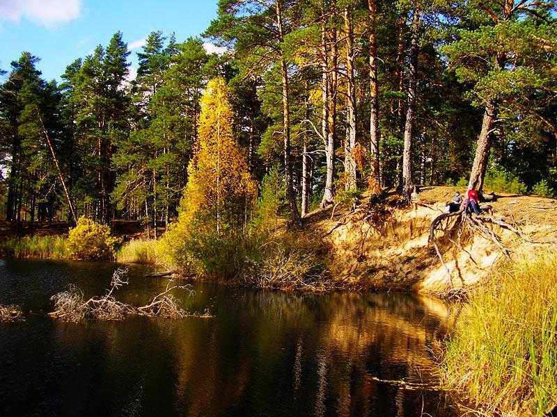 Картина Шишкина в природе: www.trekkingclub.ru/albom/pvd.htm